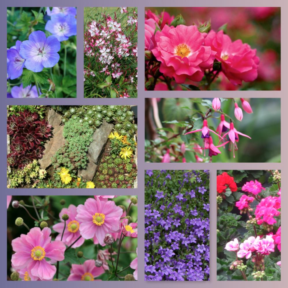 Kits Fleurs Offrez Lui Un Petit Bout De Son Jardin De Reve